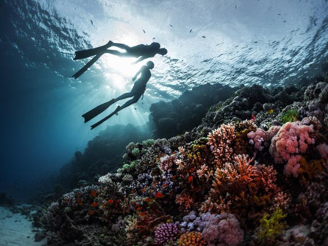 10 fondos marinos para bucear, la luna de miel más exótica