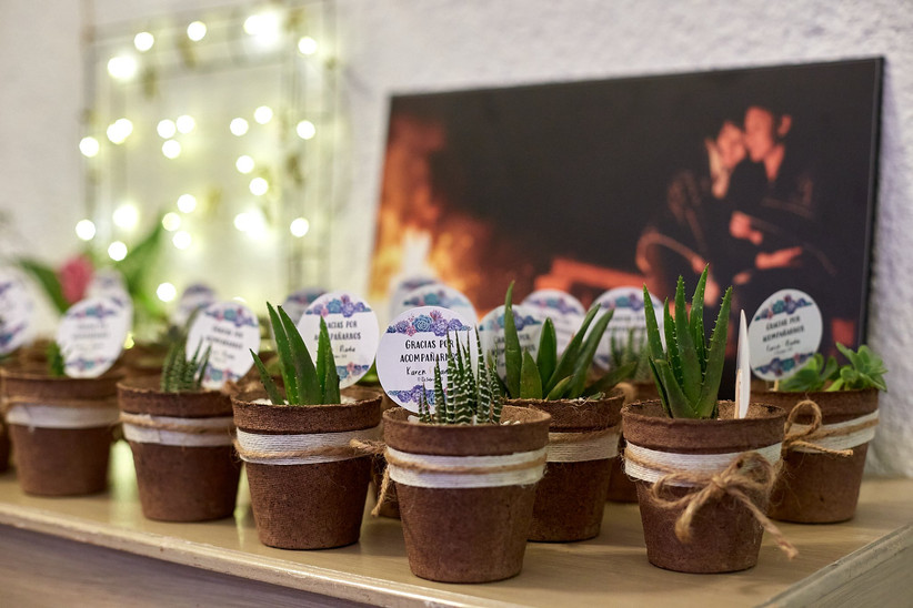 plantas como recuerdos de boda