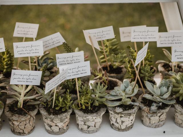 Suculentas en la boda: cómo decorar el banquete ¡y hasta su imagen!