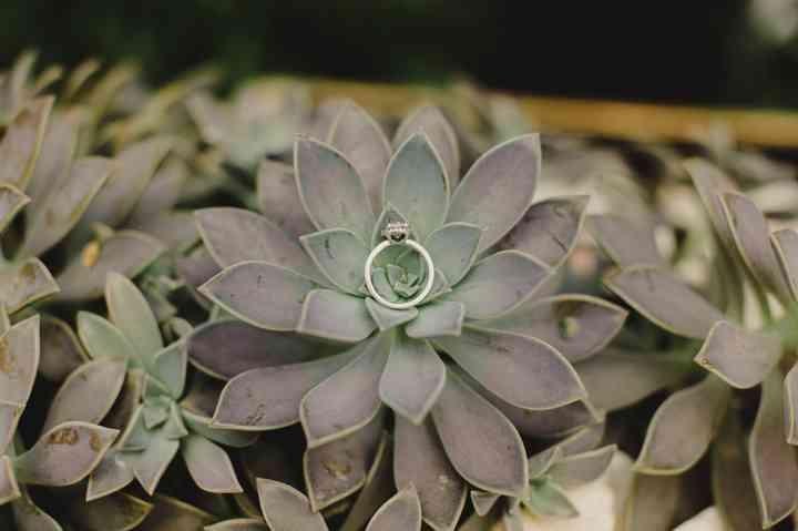 imágenes de anillos de compromiso en planta suculenta