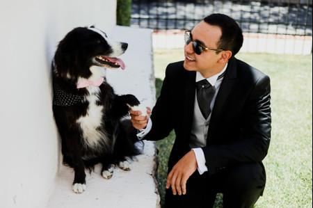 Vestuario para mascotas en una boda: glamur para los más consentidos