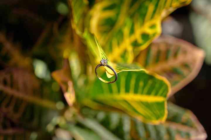 foto anillo de compromiso en hojas verdes y amarillas