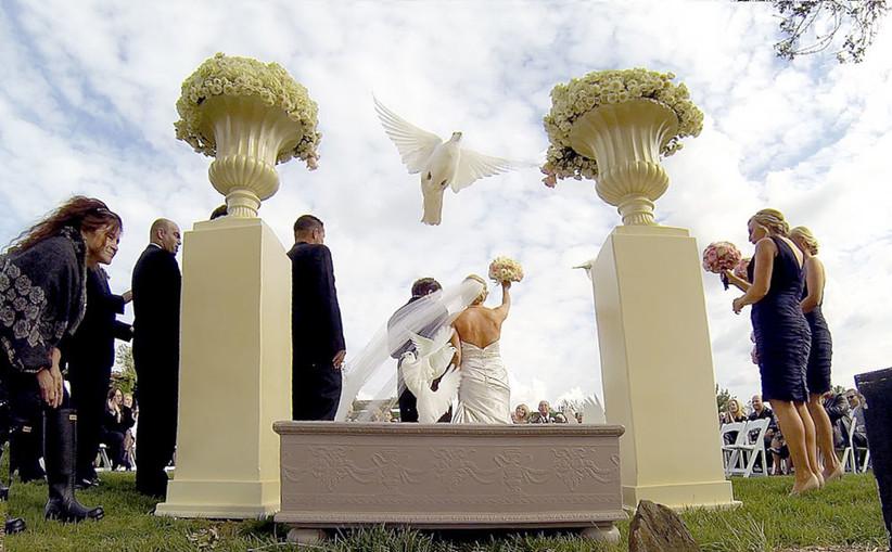Hermosas Palomas Blancas Liberacion en Eventos