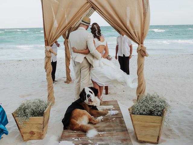 Protocolo para mascotas en la boda, ¡todo lo que necesitan saber!