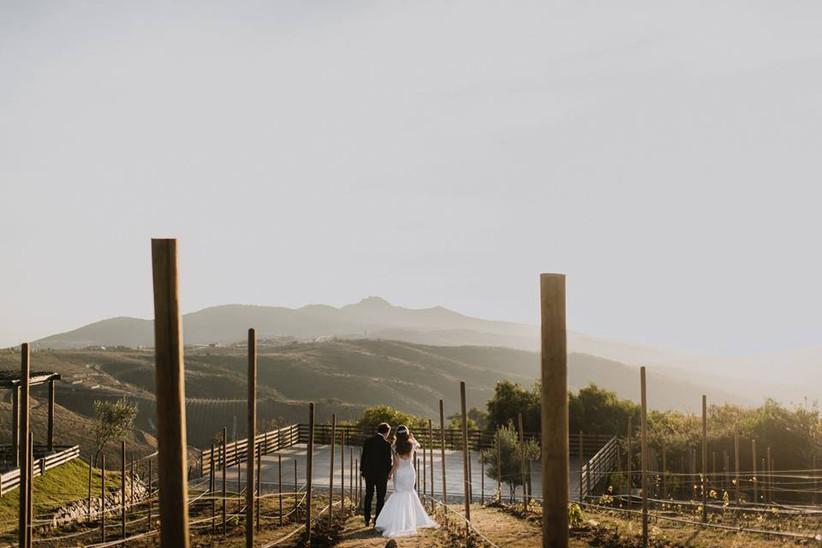 pareja de recién casados con vistas a viñedo en México