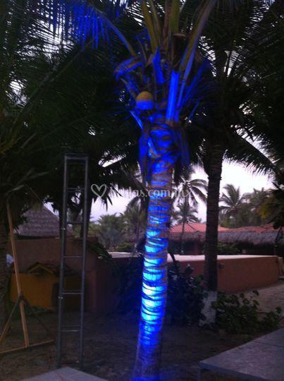 Audio concepto for Iluminacion para palmeras
