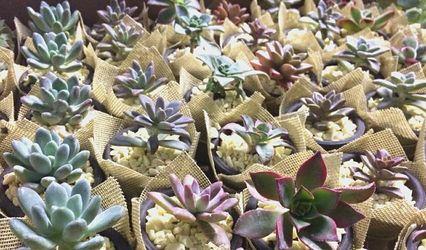 Desierto Floral