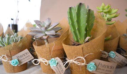 Lux - Cactus