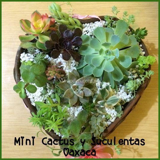 Opiniones de mini cactus y suculentas oaxaca for Curso cactus y suculentas