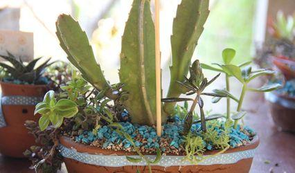 Mini Cactus y Suculentas Oaxaca 1