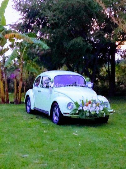 Summer Edition VW