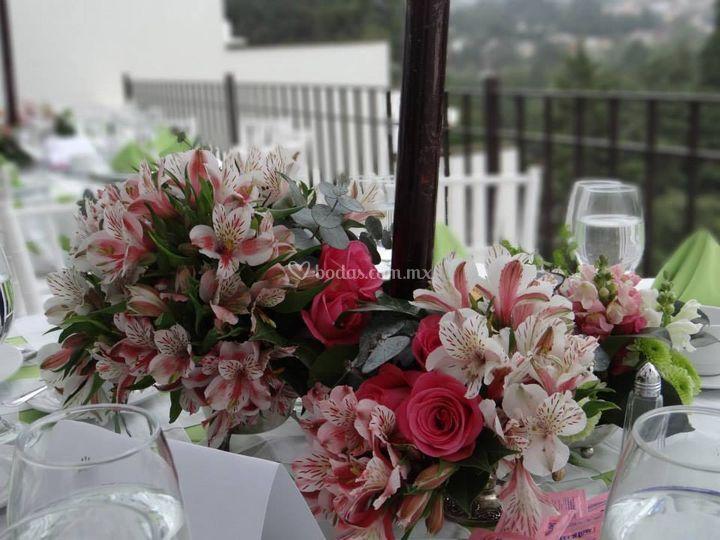 Astros y rosas
