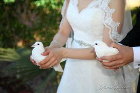 Weddings Doves Hermosillo