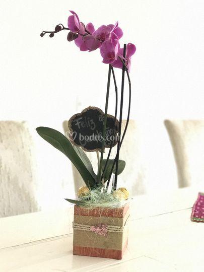 Orquídea para regalo