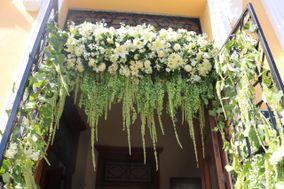 Florería Acacia