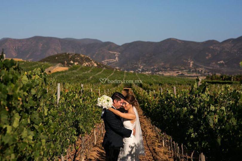 Hermosas bodas en viñedos