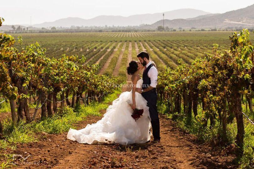 Romance entre viñedos