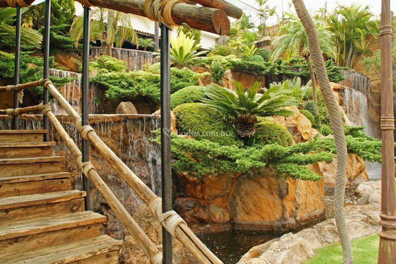 Arecas for Jardin 7 17
