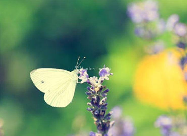 Mía Mariposa
