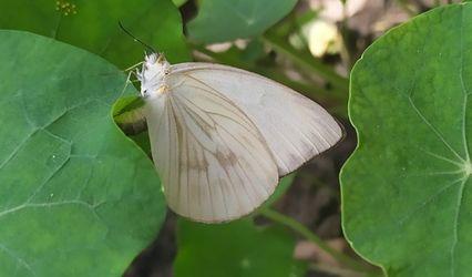 Mía Mariposa 1