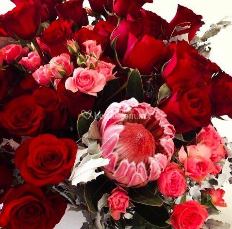 Rosas con protea