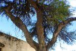 Foto  en otro patio