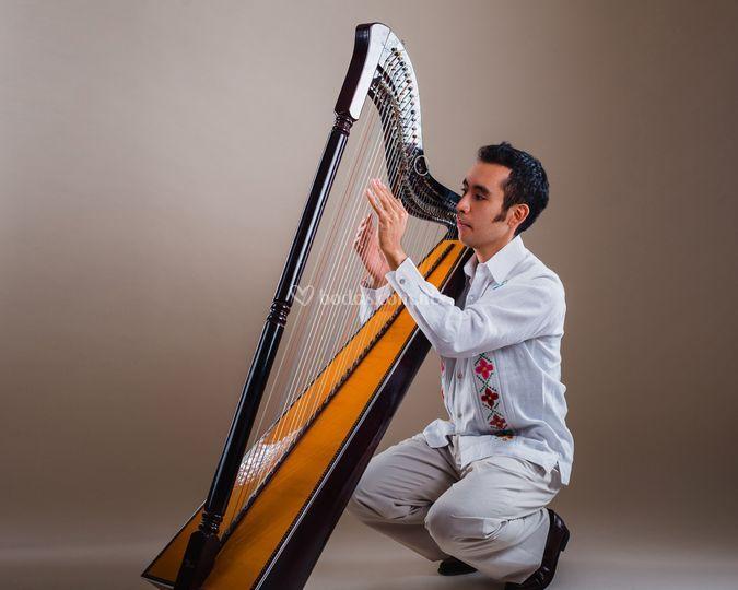 Arpista solista