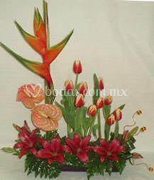 Lilis y tulipanes