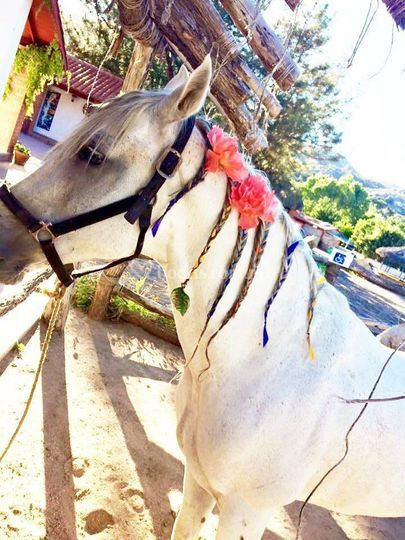 Renta de caballos