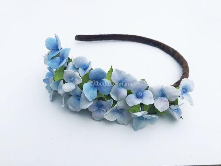 Diadema hortensias