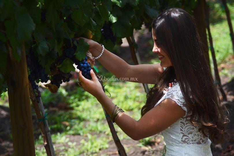 Entorno vinícola