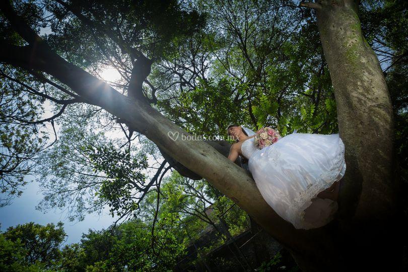 Novia en árbol