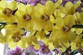 Flores nacionales