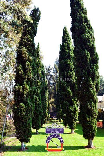 Cipreses de Jardín Zacapa