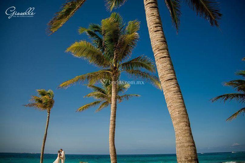 Amor trash palmeras