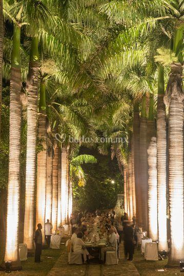 Camino palmas - cena