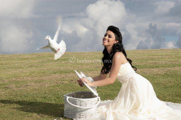 Foto novia con palomas