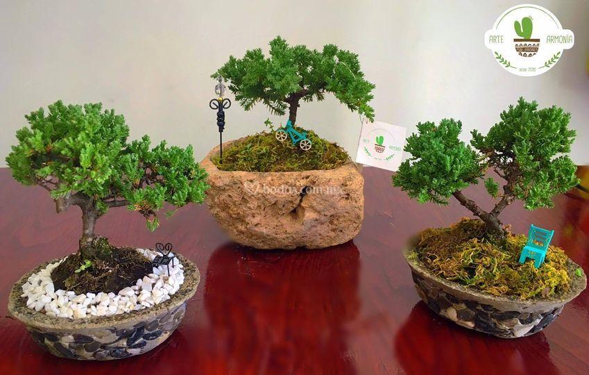 Bonsai para recuerdo