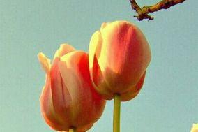 Florería Lily