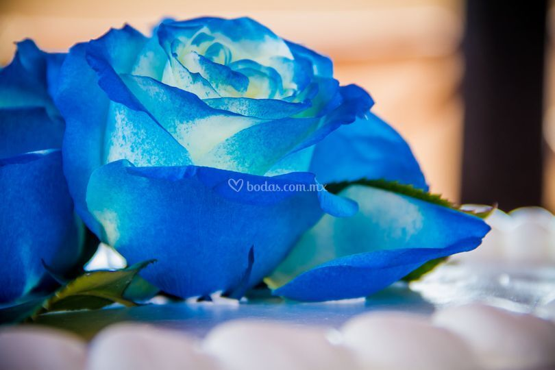 Hermosas fotos