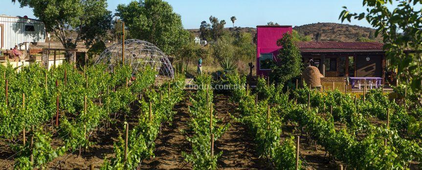 Vista a los viñedos