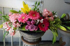 Florería Flor de Loto