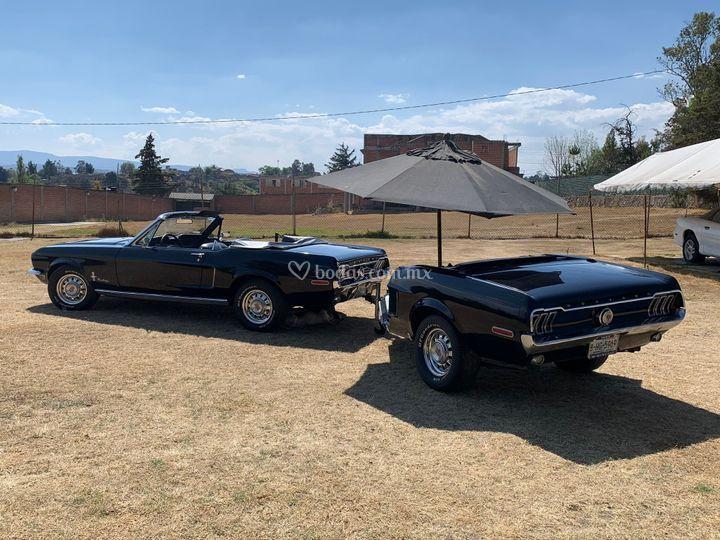 Mustang y medio ideal fotos