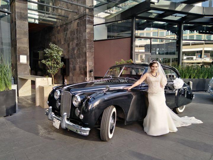 Jaguar negro novia