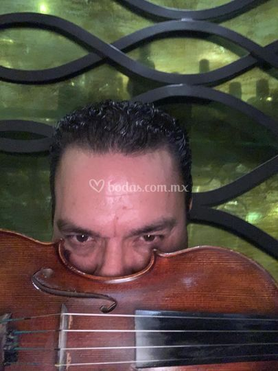 Violinsax elegance