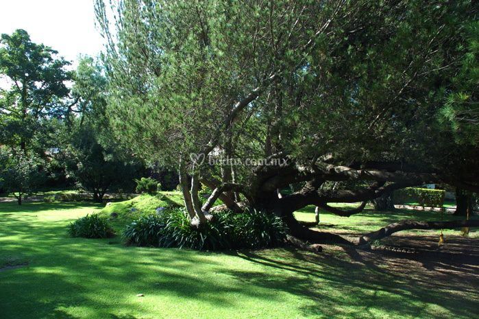 Jardin para la boda civil