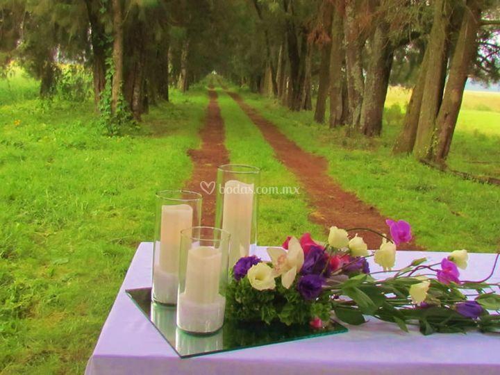 Alta en boda en hacienda