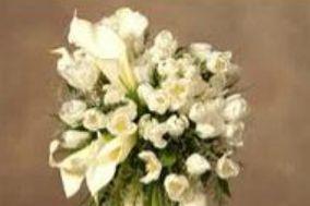 D' Gardenia