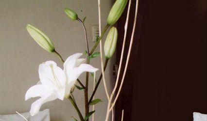 Florería Lakshmi