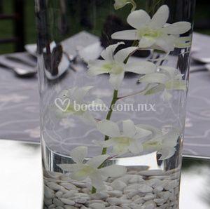 Orquídeas sumergidas